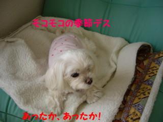 f0005727_20315455.jpg
