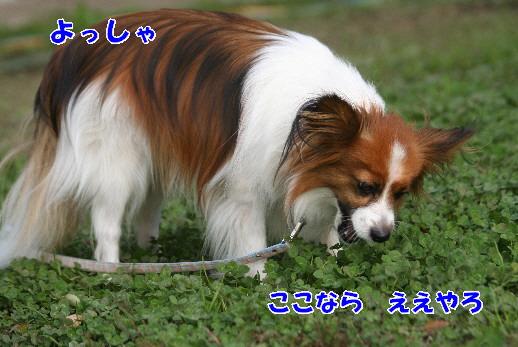 d0013149_2363314.jpg