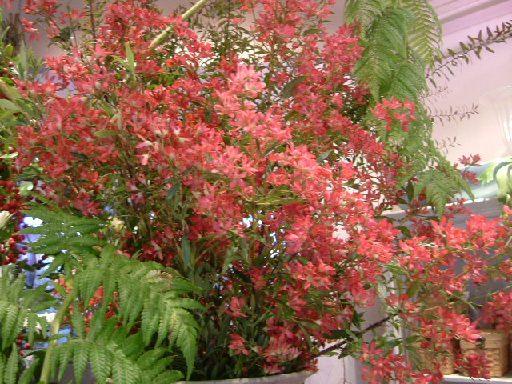 オークリーフ(そろそろ春の花も)_f0049672_12592772.jpg