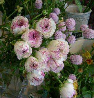 オークリーフ(そろそろ春の花も)_f0049672_12594423.jpg