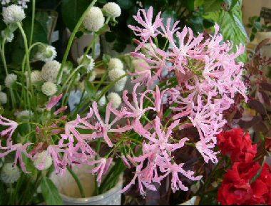 オークリーフ(そろそろ春の花も)_f0049672_1302312.jpg