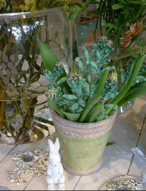オークリーフ(そろそろ春の花も)_f0049672_1303647.jpg