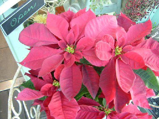 オークリーフ(そろそろ春の花も)_f0049672_1304884.jpg