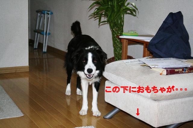 f0054290_9364961.jpg