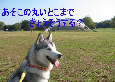 f0112407_2504567.jpg