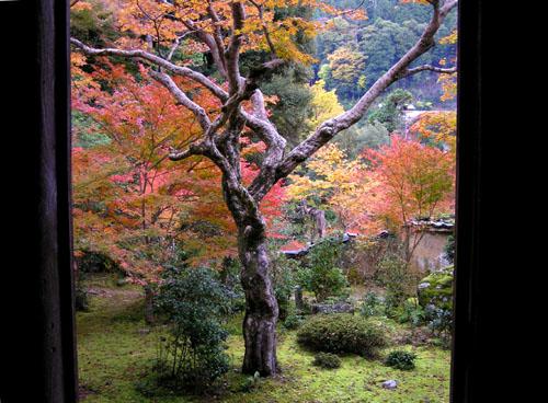 槙尾山 西明寺2_e0048413_10375254.jpg