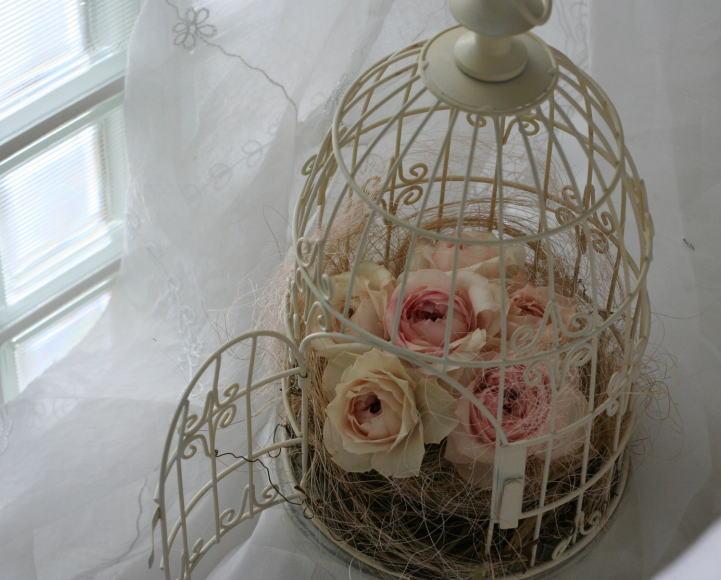 鳥かごの中 バラ「ジュンカップ」_a0042928_23495321.jpg
