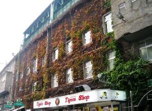 グッズの売っている売店の上には、紅葉した蔦が壁を覆っています。ここはまだ真っ赤にはなっていませんね。