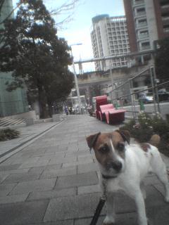 仕事好きな犬_c0099133_157392.jpg