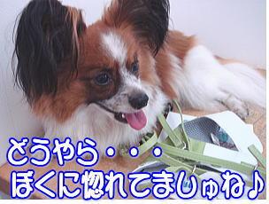 f0011845_2313820.jpg