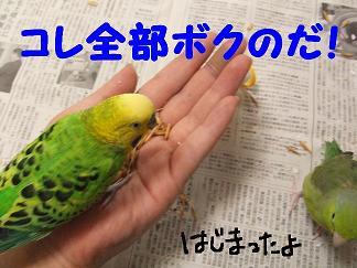 b0082757_2253957.jpg