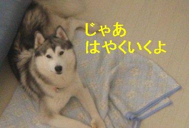 f0112407_13162032.jpg