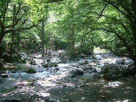 小田深山渓谷での国有林施業_e0002820_1701528.jpg