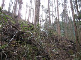 小田深山渓谷での国有林施業_e0002820_1710661.jpg
