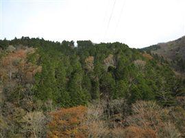 小田深山渓谷での国有林施業_e0002820_1720522.jpg
