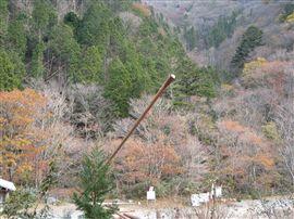 小田深山渓谷での国有林施業_e0002820_17223992.jpg