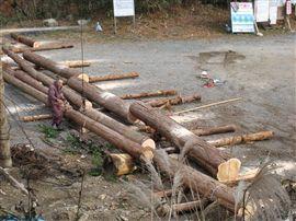 小田深山渓谷での国有林施業_e0002820_1723422.jpg