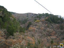 小田深山渓谷での国有林施業_e0002820_17254771.jpg