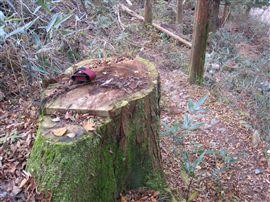 小田深山渓谷での国有林施業_e0002820_1775755.jpg
