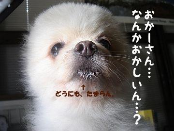c0087521_14514610.jpg