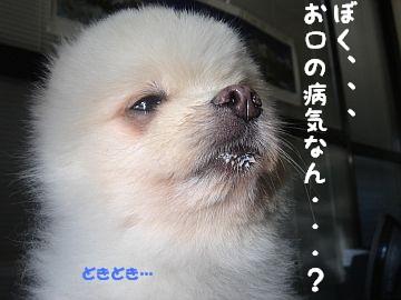 c0087521_14521745.jpg