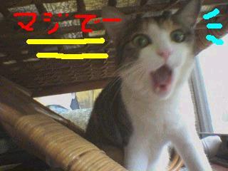 ウェルカム!'07MODELちゃん!_f0056935_21105993.jpg