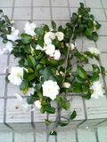b0095643_8343249.jpg