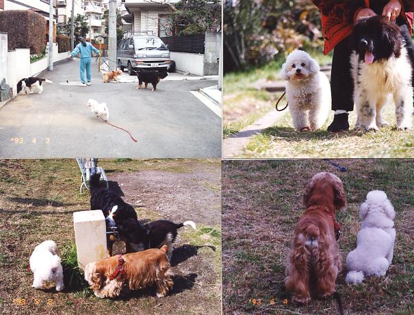 ペットショップで売れ残りとなった犬は里親がみつ …