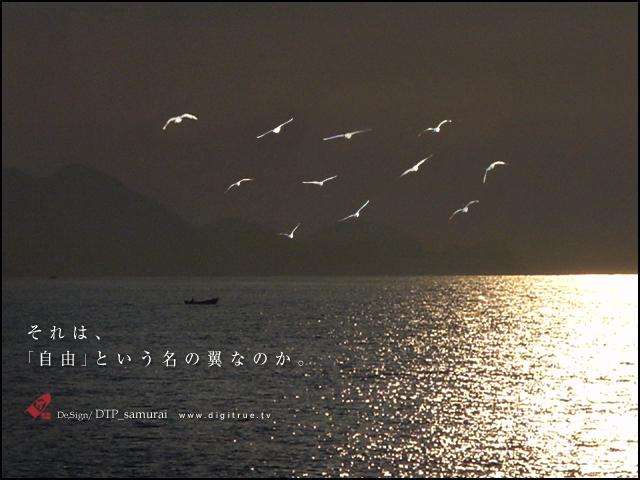 自由という名の翼_a0054755_320277.jpg