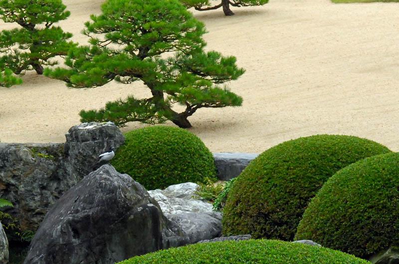番外 足立美術館庭園のセキレイ_b0024798_10134698.jpg