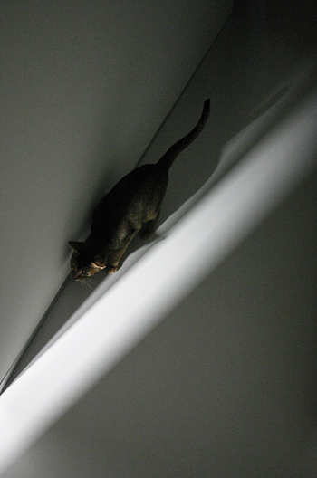 [猫的]ムズムズ猫_e0090124_9452484.jpg