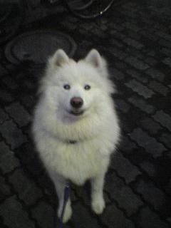 大きい犬は大変?_c0099133_20475549.jpg