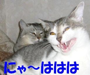 プチ団子_f0002743_21204047.jpg