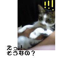 b0022595_11212048.jpg
