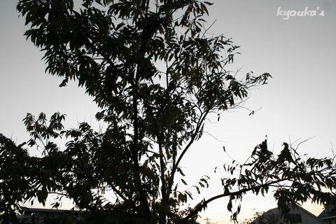 f0107900_15383093.jpg
