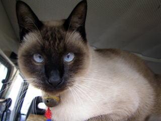 猫の時間_b0105719_19191076.jpg