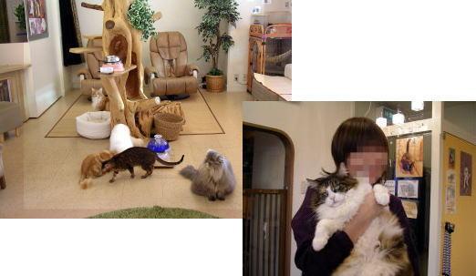猫の時間_b0105719_1935680.jpg