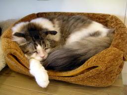 猫の時間_b0105719_1937191.jpg