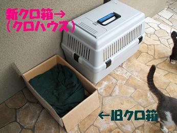 f0100012_1620434.jpg