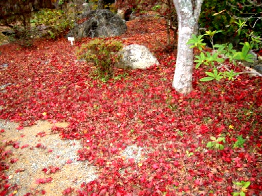 紅葉も終わりに。_f0085369_22193619.jpg