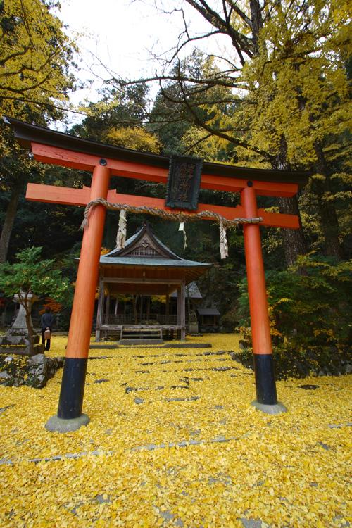 散りイチョウに覆われる神社(岩戸落葉神社)_e0051888_1834785.jpg
