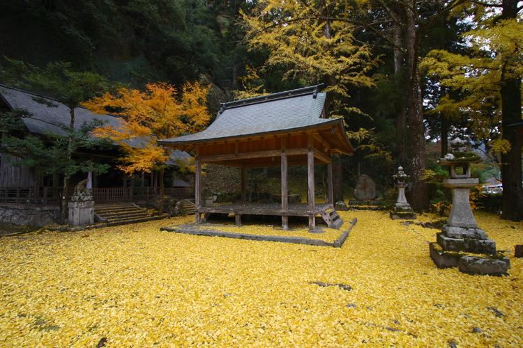 散りイチョウに覆われる神社(岩戸落葉神社)_e0051888_1835499.jpg