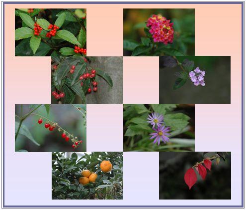 秋の庭_c0051105_0174789.jpg