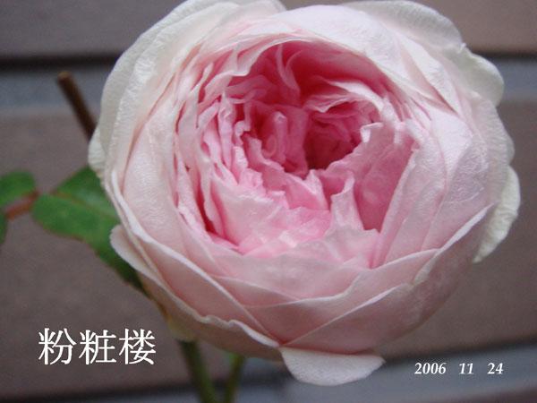 f0057006_1558431.jpg