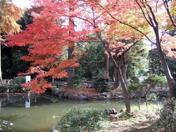 晩秋の井の頭公園_f0012718_23355054.jpg