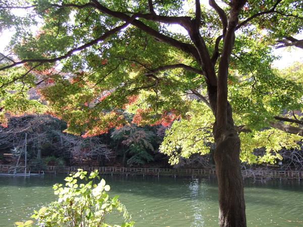 晩秋の井の頭公園_f0012718_2363074.jpg