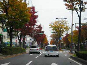車の中から撮影した街路樹のある道路。両脇の街路樹が紅葉して、赤や黄色に染まっています。