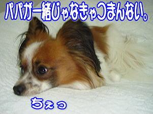 f0011845_2221018.jpg