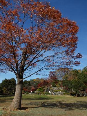 上尾丸山公園_a0027275_18144279.jpg