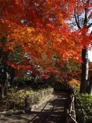 上尾丸山公園_a0027275_18154056.jpg